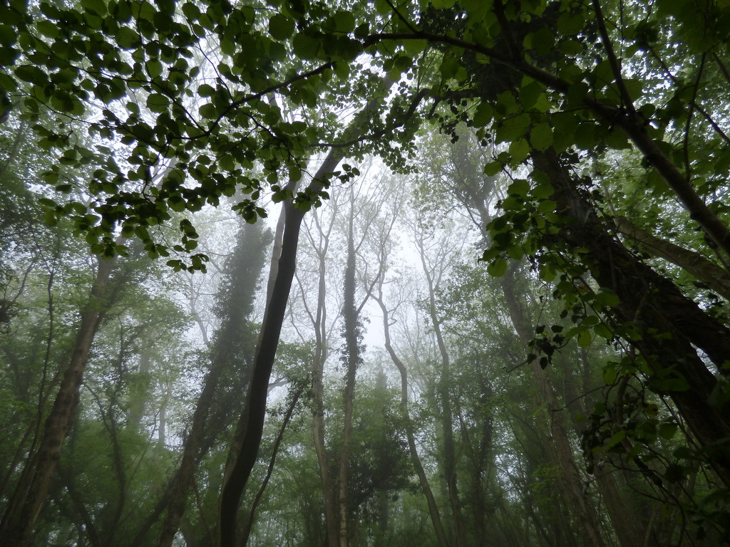 Misty morning in the woods by julienne1