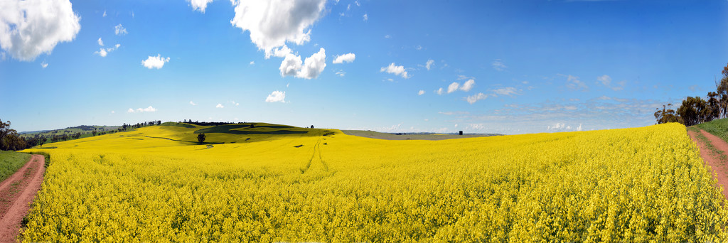 My First Attempt At A Pano........ by merrelyn