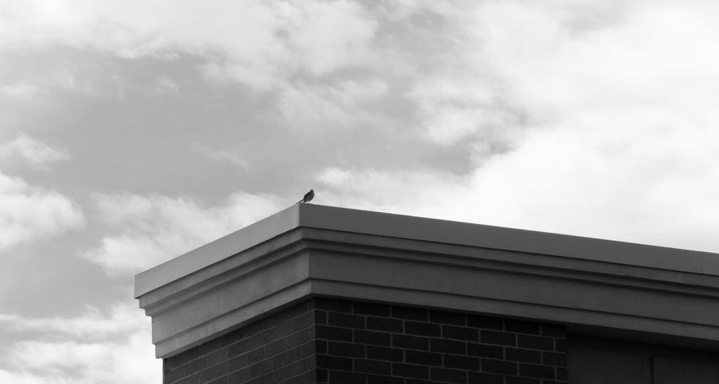B&W Sky (bonus bird) by linnypinny