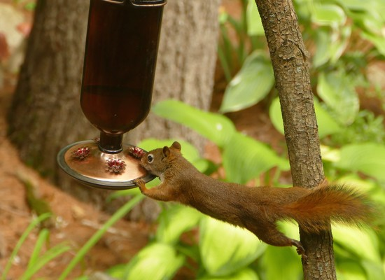 Tilt, Drink by sunnygreenwood