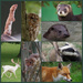 British Animals by 30pics4jackiesdiamond