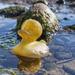 Yellow duck.