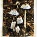 ink mushroom/Inktzwam by madeinnl