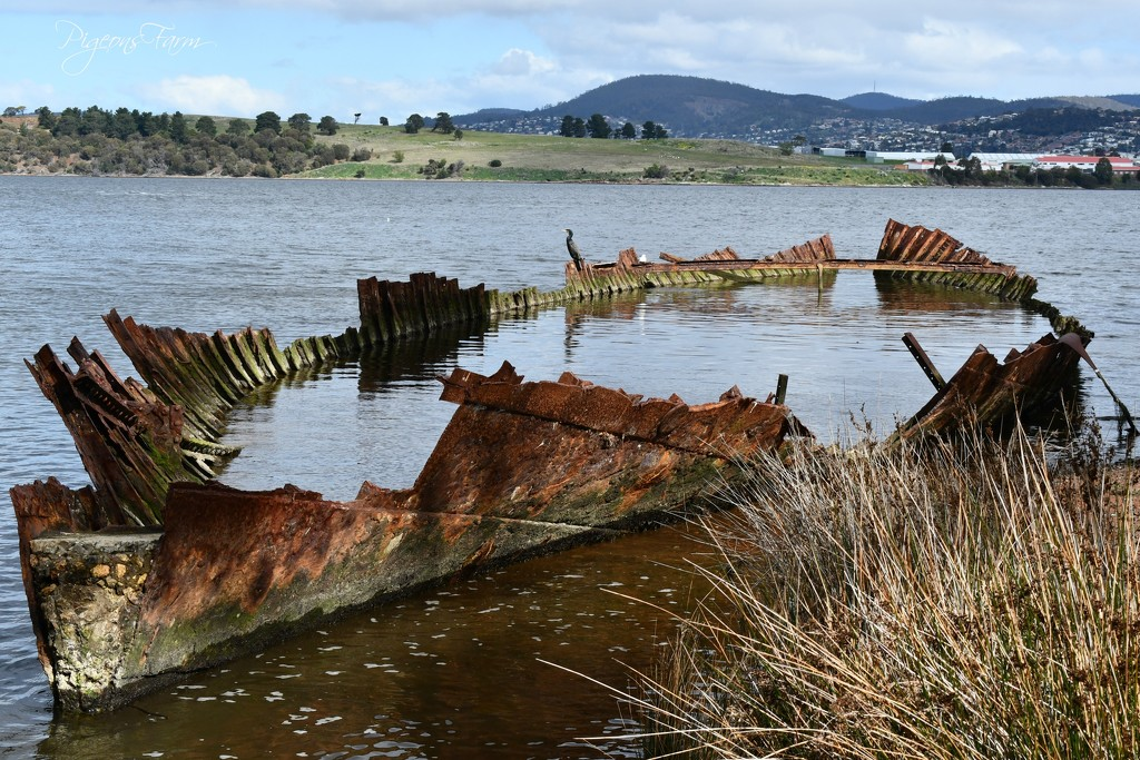 The 'Otago' on the River Derwent by kgolab