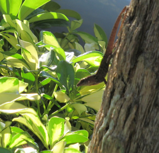 Salamander by bruni