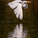 Egret Flowing By