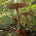 'Under a toadstool ..... by busylady
