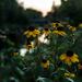 The Golden Hour by farmreporter