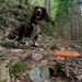 Jasper and the fly agaric