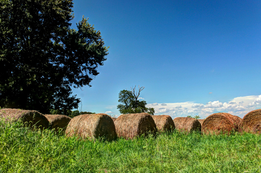Bales of hay by mittens
