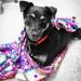 Katie in Her Blanket