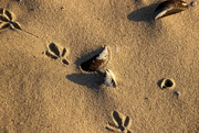 24th Aug 2018 - 2018 08 24  Footprints in the Sand