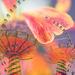 carousel flower by pistache