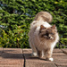 Catwalk Kayleigh