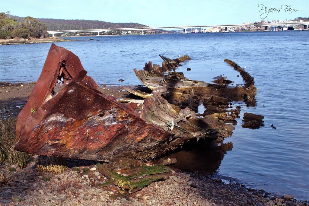 The Westralian - Otago Bay by kgolab
