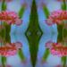 carnations........