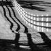 shadows by samae