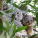 a tiny clear spot by koalagardens