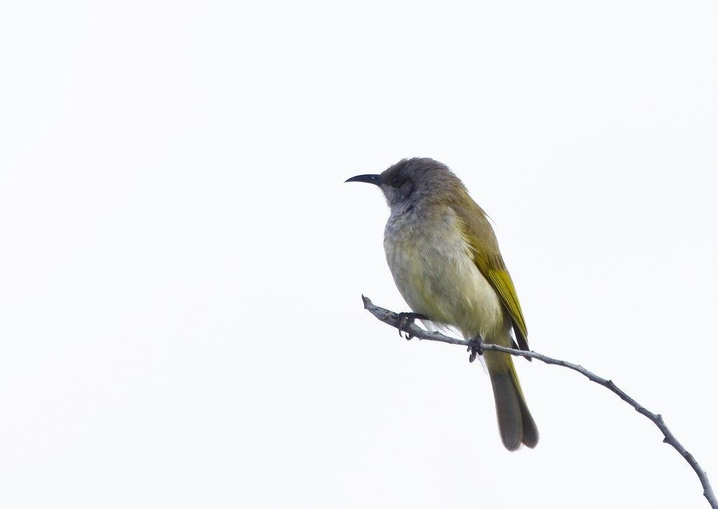 Just A Bird On A Stick....._DSC7256 by merrelyn