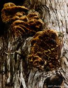12th Sep 2018 - tree fungi