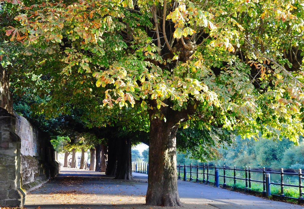 Chestnut trees. by rosie00