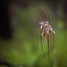 A clutter of Spider Orchids by jodies