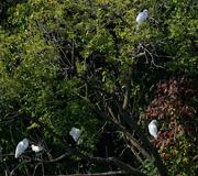 13th Sep 2018 - egret landscape
