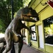 Rex on Deep Ellum's sidewalk
