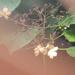 between leaves