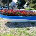 A Flowery Boat