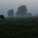 Another Foggy Morning by farmreporter