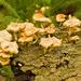 Fungi on the Stump!