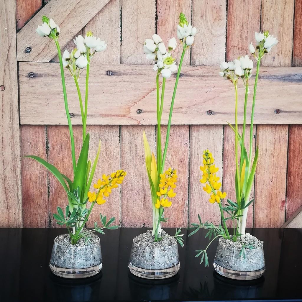 Triple Spring Flowers by salza