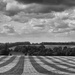 Striped Stubble by fbailey