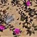 Tiny Flowers On The Beach ~