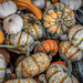 Gourds by joansmor