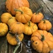 Picked my Pumpkins