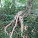 Root in the forest