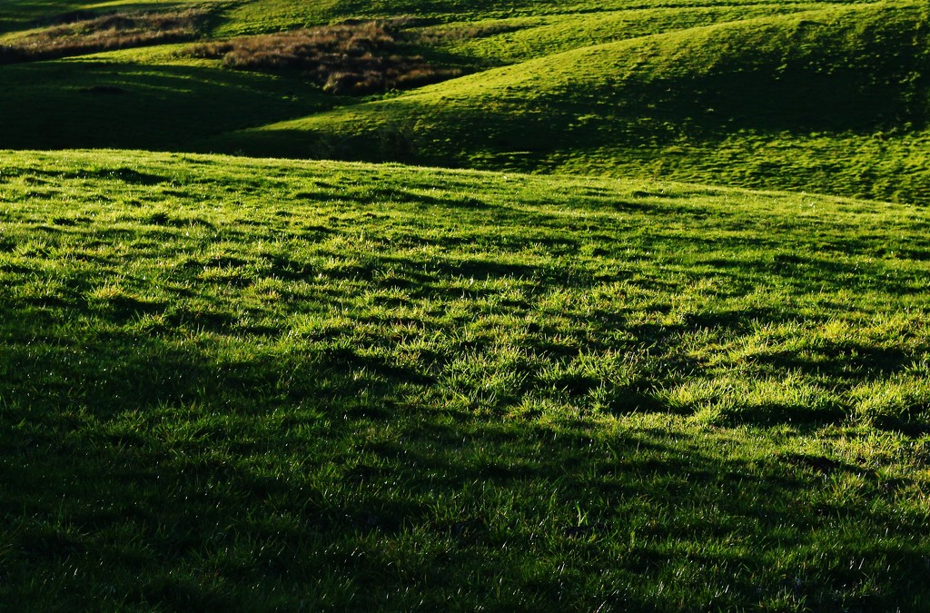 green, green grass of home by wenbow
