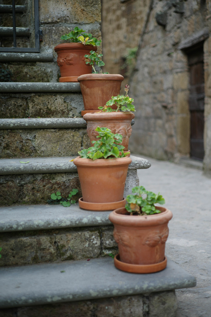 Five geranium pots by domenicododaro