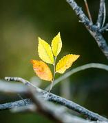15th Sep 2018 - tell tale leaves