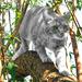Minky on the prowl by ludwigsdiana