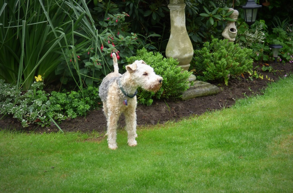 Always on the look out !  by beryl