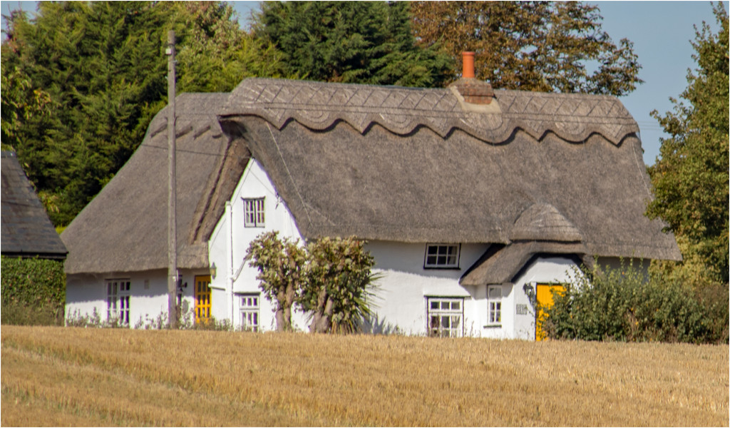 Thatch by mave