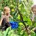 school garden harvesting