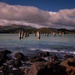 The old wharf piles  - Lyttelton Harbour NZ by maureenpp