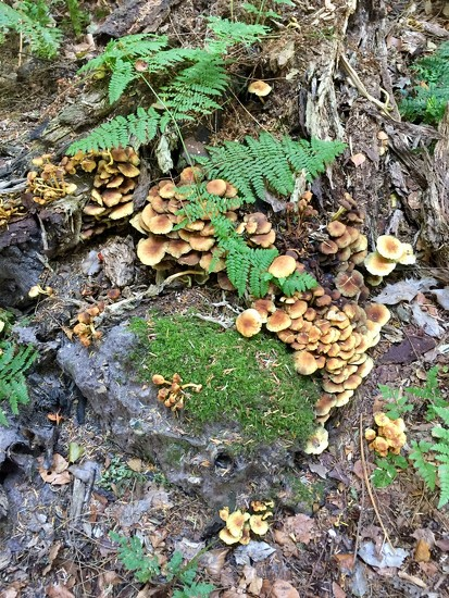 Fungi by gillian1912