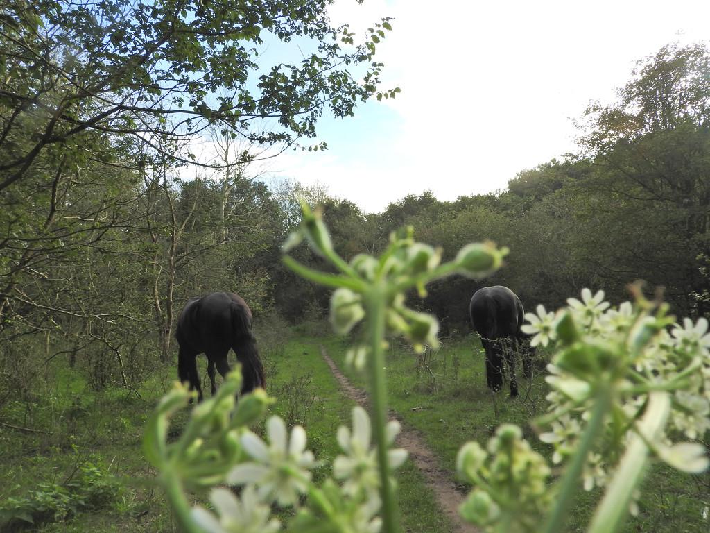 Horses along the trail by marijbar