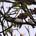 Five Little Baby Birds ~