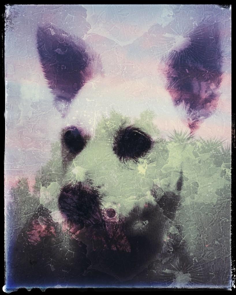 Roxy by salza